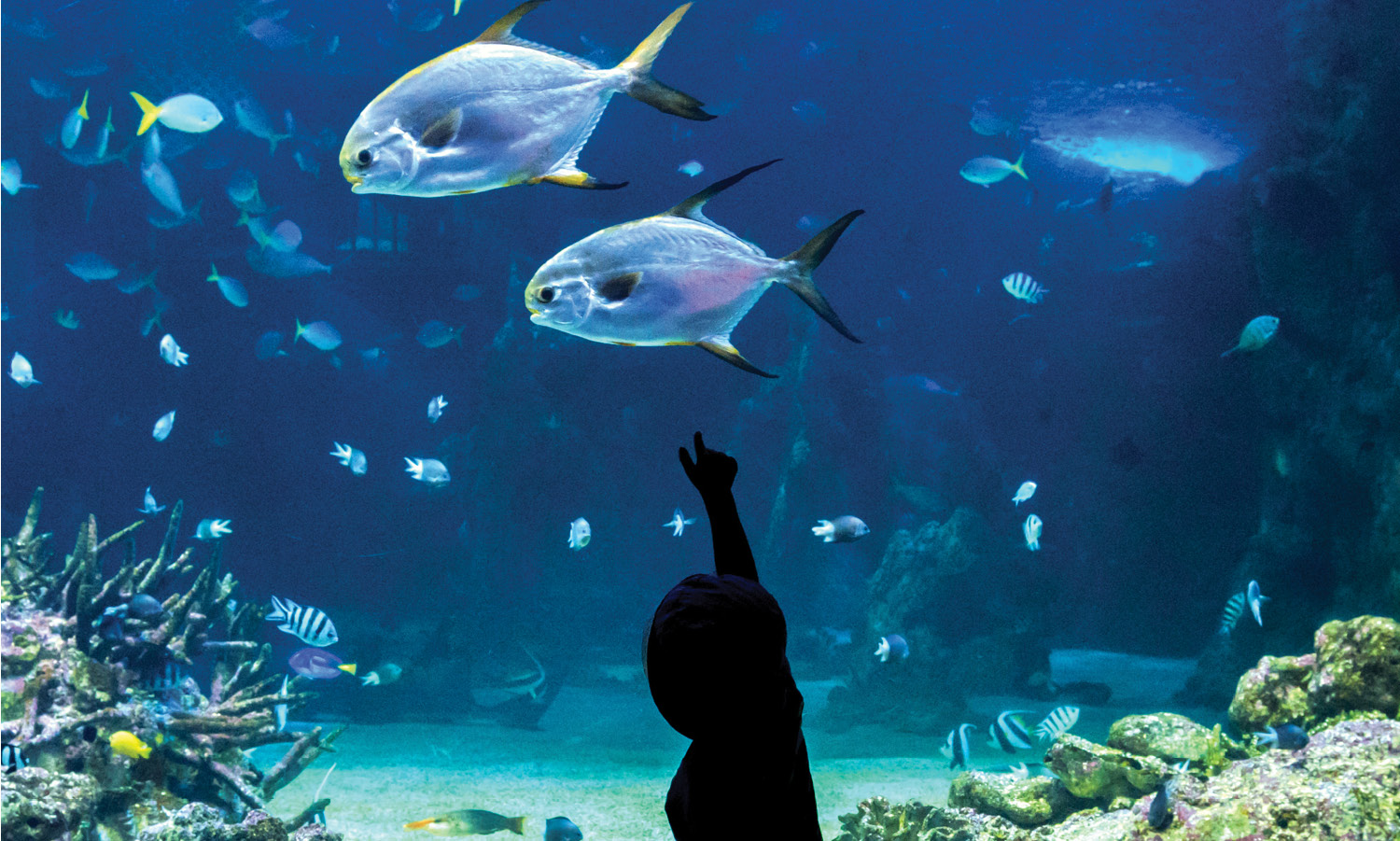 Silhouette of young child in front of a large aquarium. The child is pointing to 3 large fish, and there are many smaller fish in the background of the aquarium.